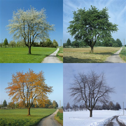 3A7-årstider.jpg